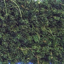Tapis coco au mètre vert  Jardin